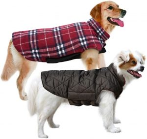 Winter Coats for Dogs